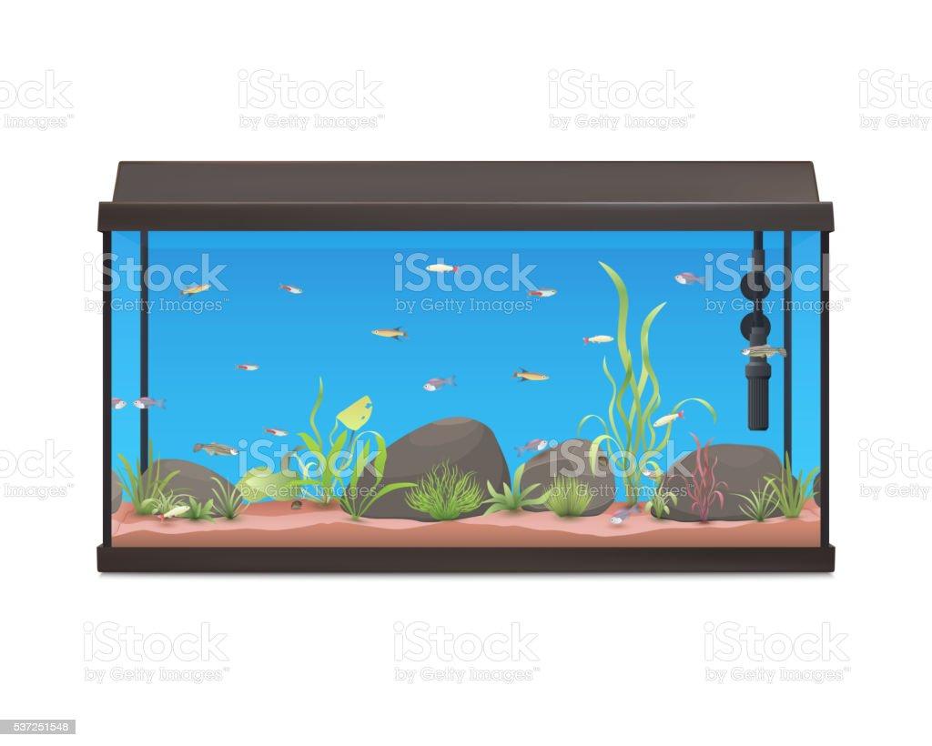 Aquarium with fishes stones and plants. vector art illustration