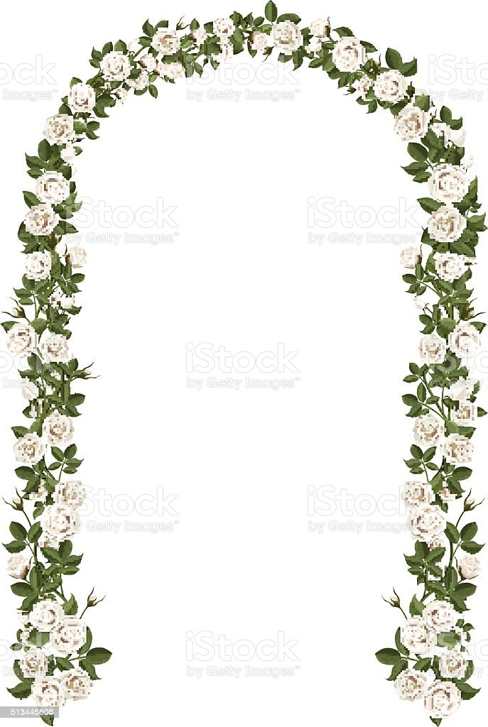 Arch of white climbing roses vector art illustration