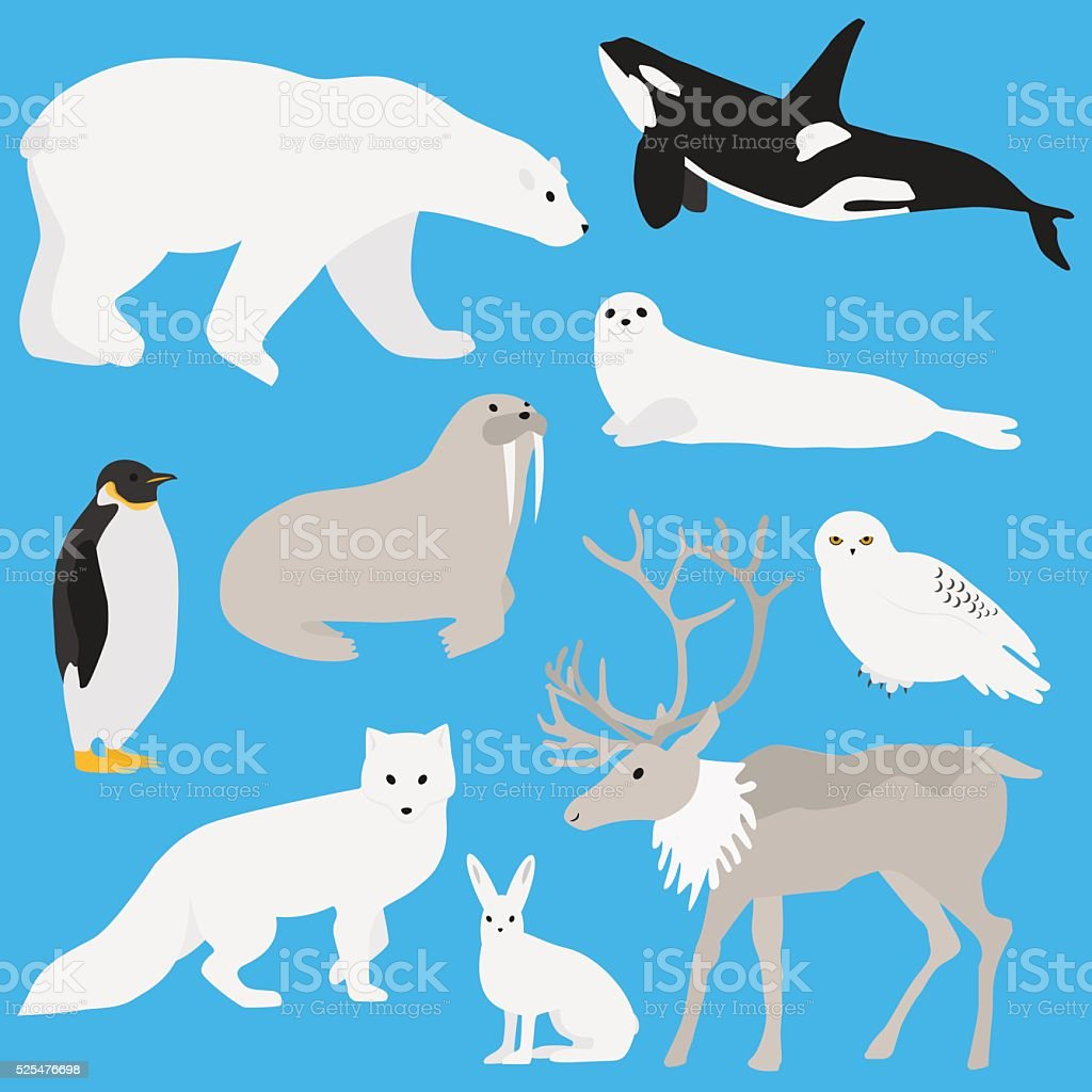 Arctic animals collection three vector art illustration