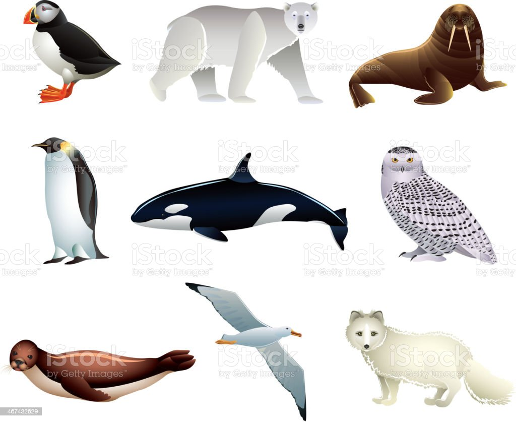 Arctic animals vector set vector art illustration