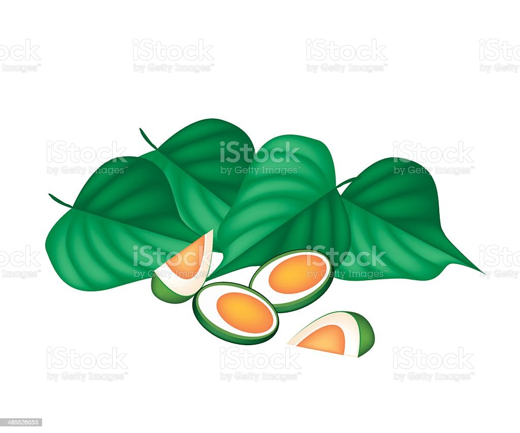 Areca Nuts and Betel Leaves on White Background vector art illustration