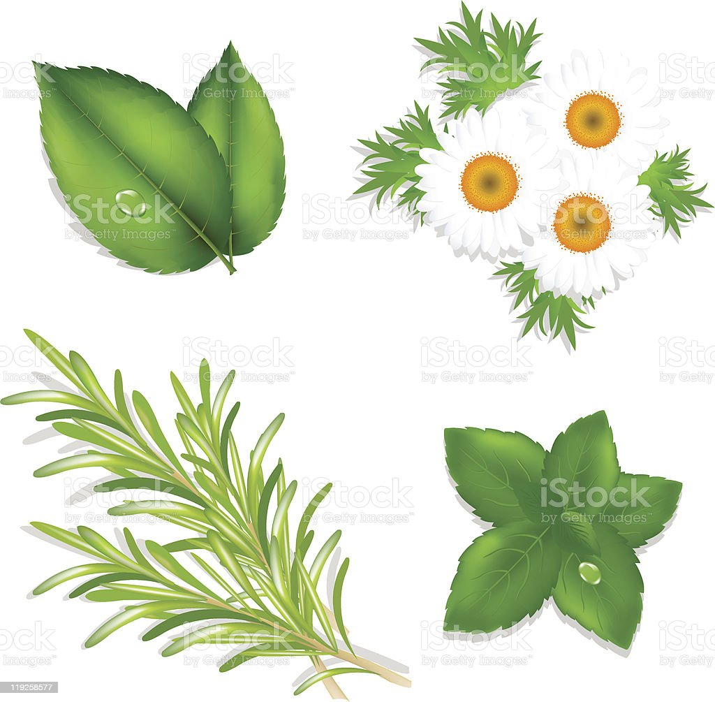 Aroma Herbs royalty-free stock vector art