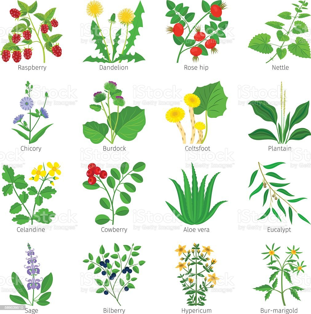 Aromatherapy medical herbs and flowers vector art illustration
