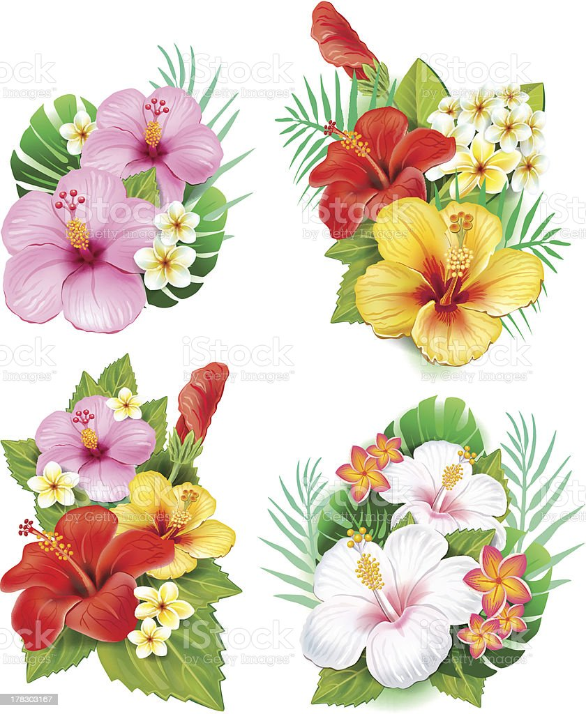 Arrangement from hibiscus flowers royalty-free stock vector art