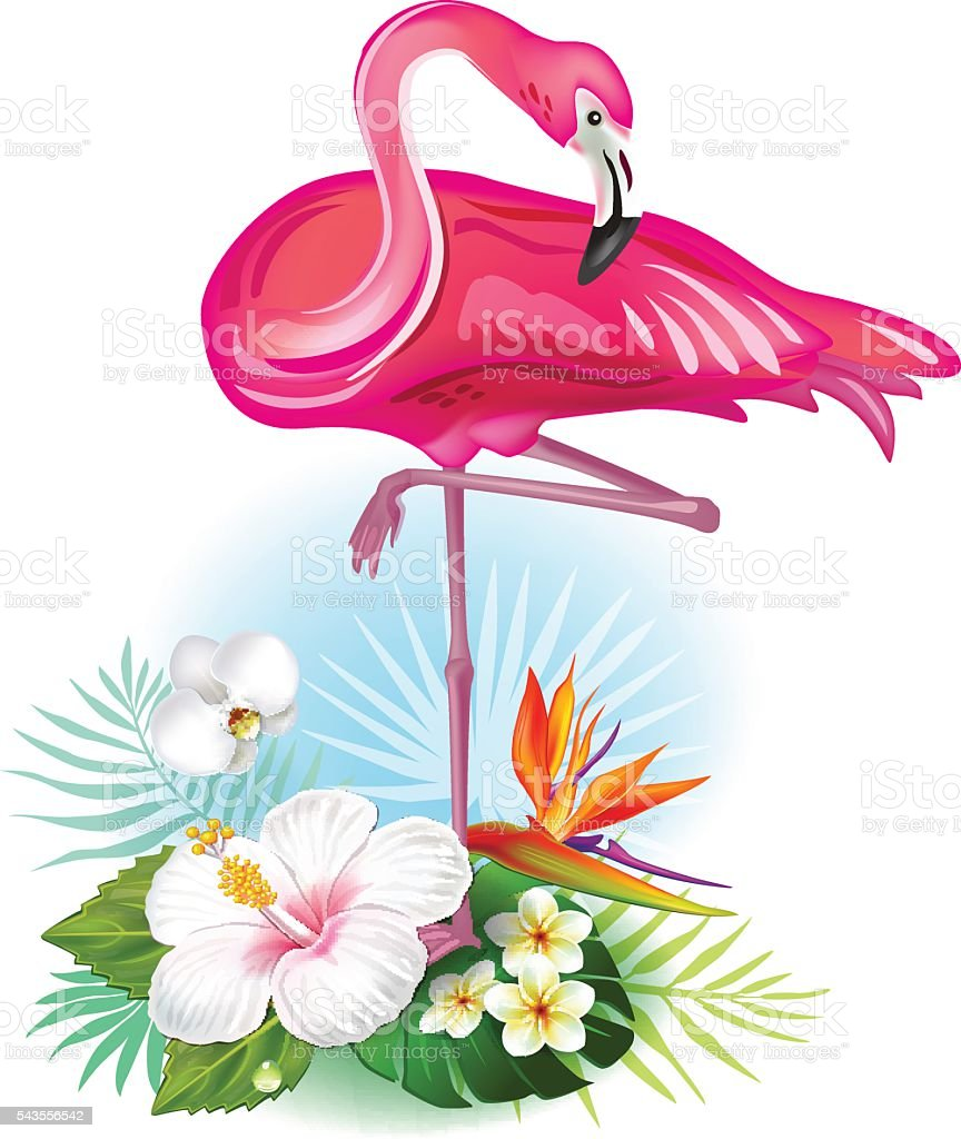 Arrangement from tropical flowers and Flamingo vector art illustration