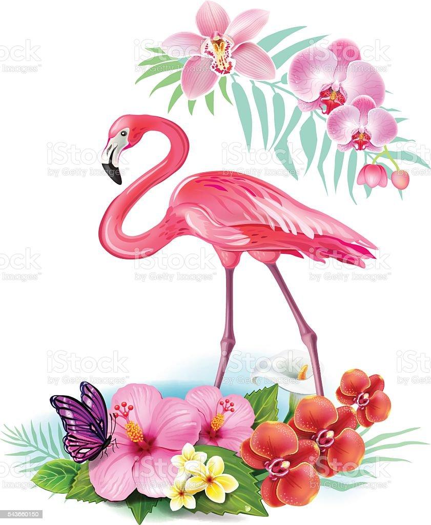 フラミンゴの画像 p1_15