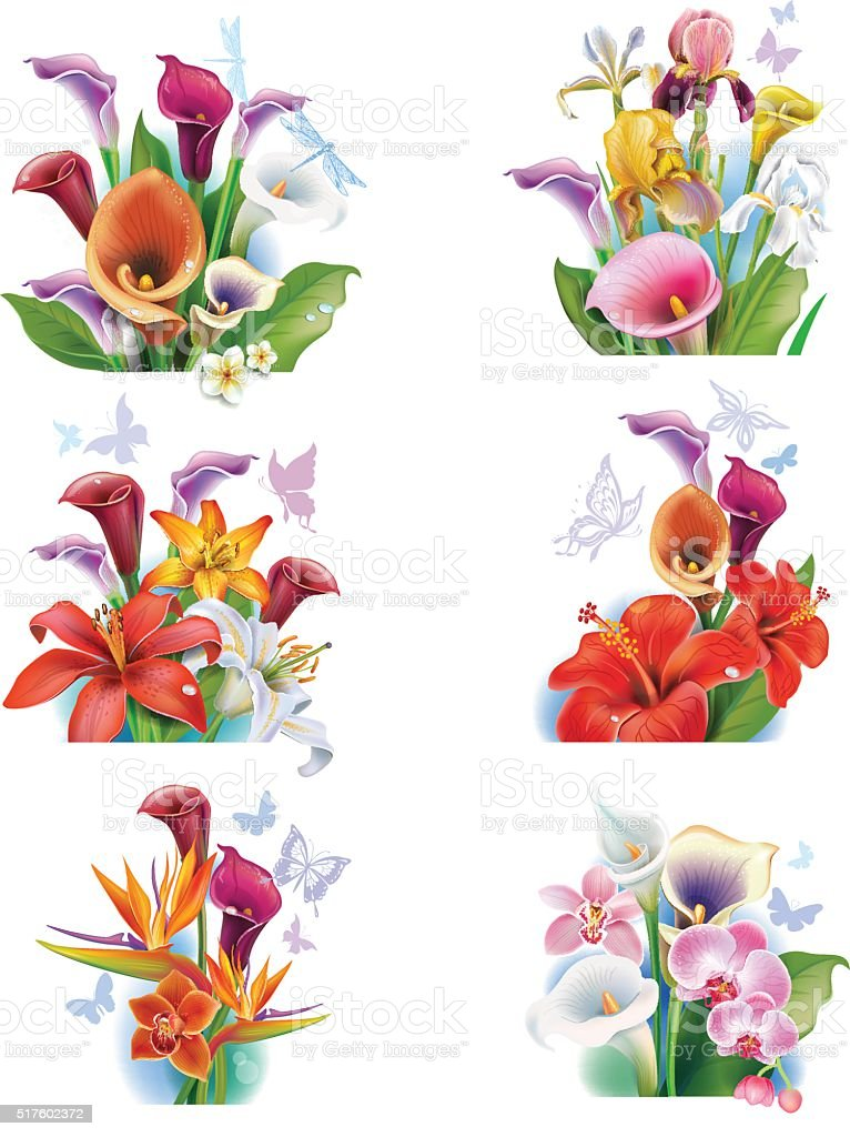Arrangement from tropical flowers vector art illustration