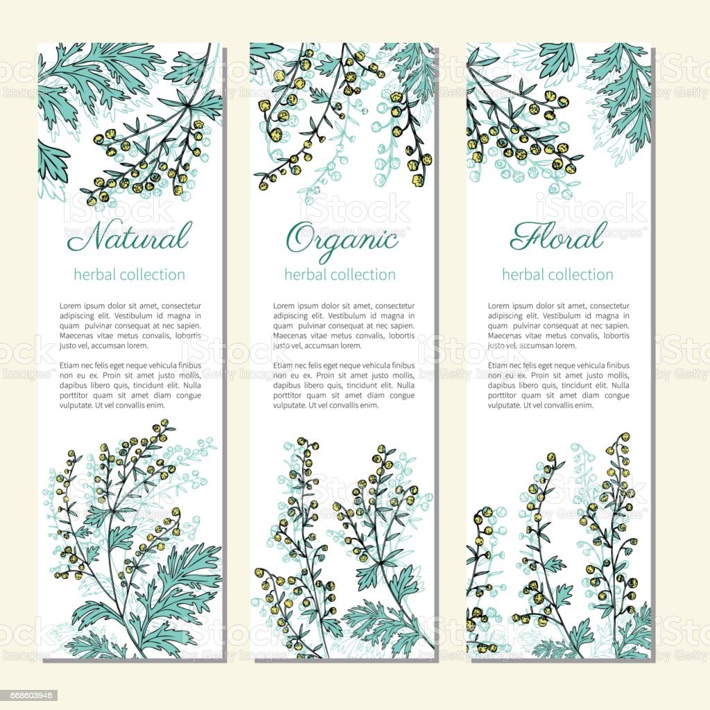 Artemisia absinthium, absinthe wormwood hand drawn vector ink color sketch isolated on white, Absinthe plant, Doodle Healing, Vector vertical banner, label for cosmetics, design package, textile vector art illustration