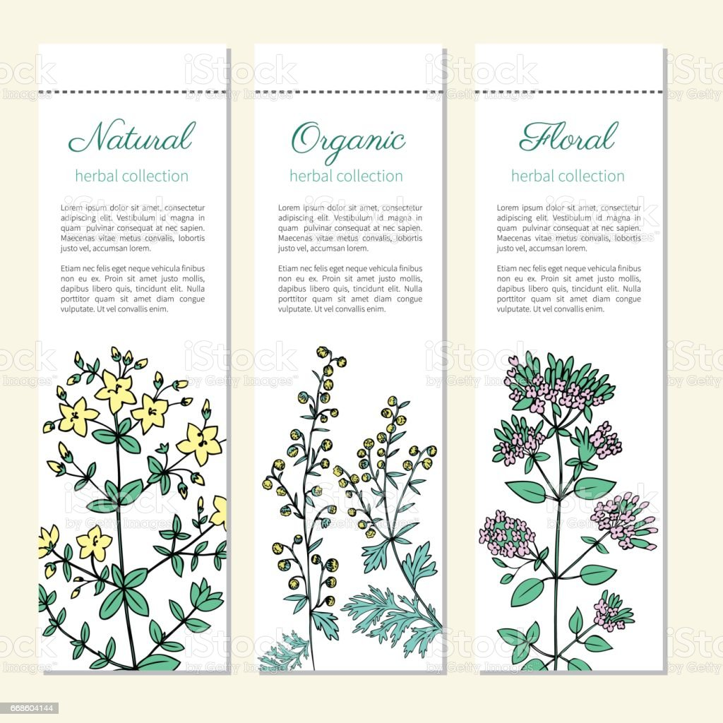 Artemisia absinthium, absinthe wormwood, Hypericum, St. John's wort or Hartheu, Oregano hand drawn vector isolated on white, Doodle Healing, vertical banner, label for cosmetics, design herbal package vector art illustration