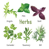 Arugula, fresh mint, purple basil, organic coriander, aromatic rosemary, dill