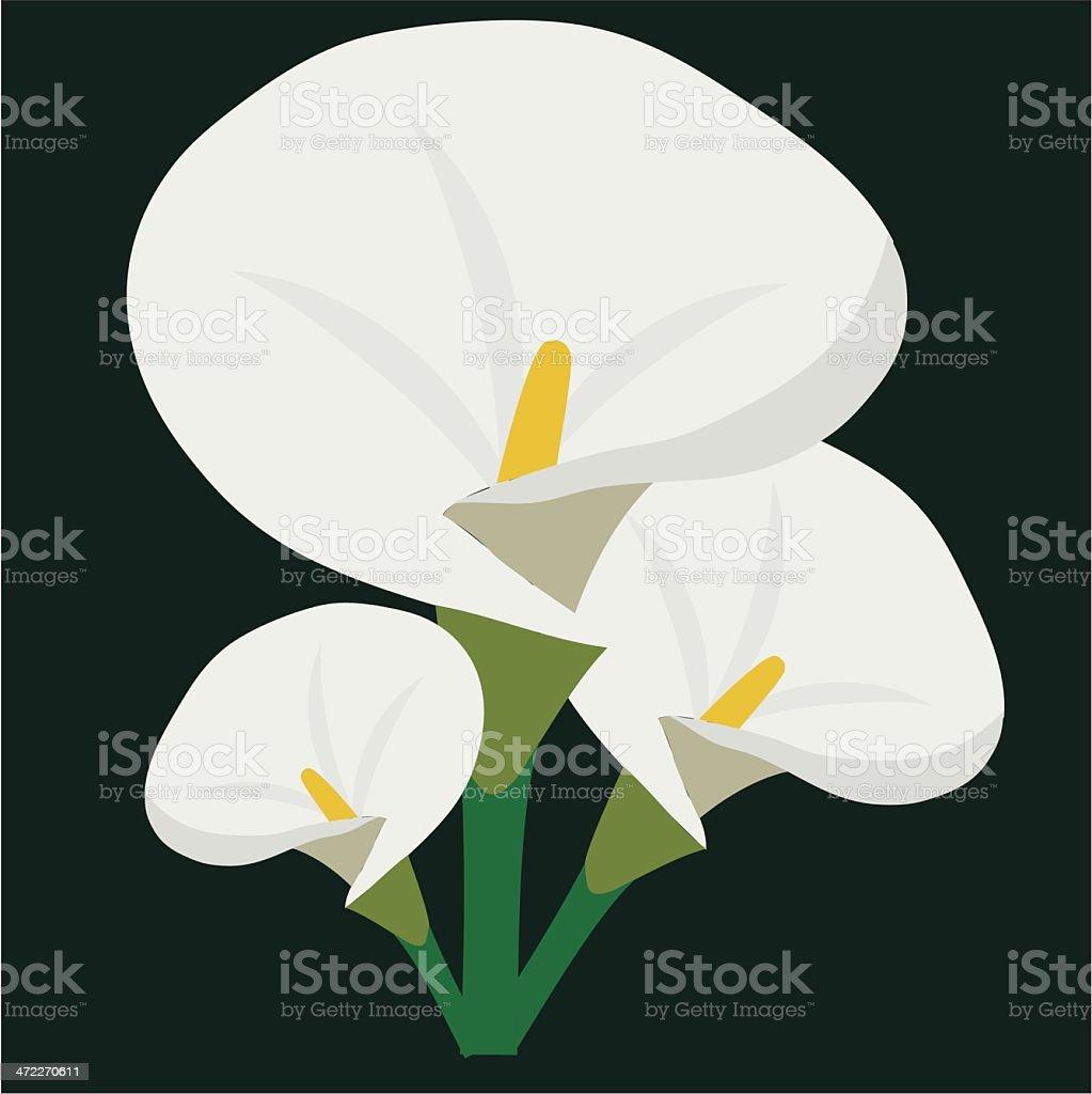 Arum (or Calla) Lilly (Vector) royalty-free stock vector art