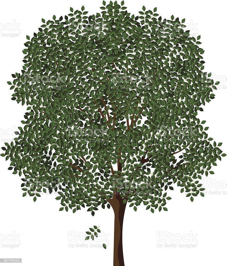ash vector art illustration