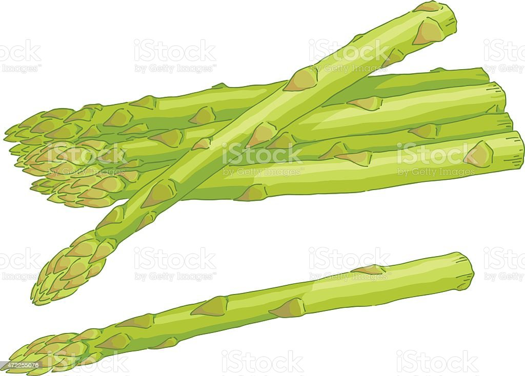 Asparagus vector art illustration