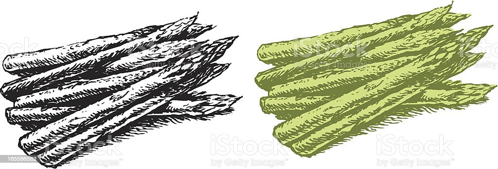 Asparagus - Vegetable royalty-free stock vector art