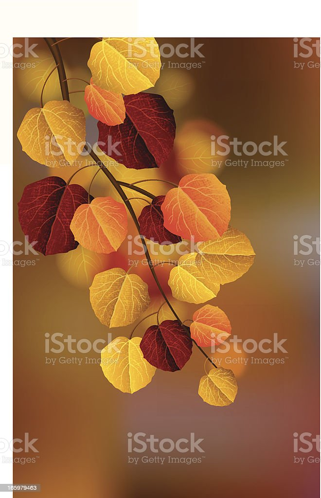 Aspen Leaves royalty-free stock vector art