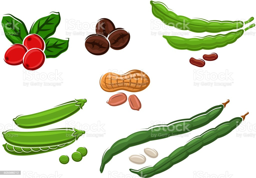 Assorted fresh cartoon legumes and nuts vector art illustration