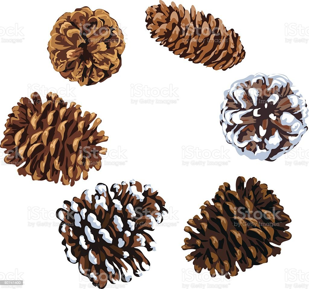 Assorted Pine Cones Illustration of Various Shapes and Sizes royalty-free stock vector art