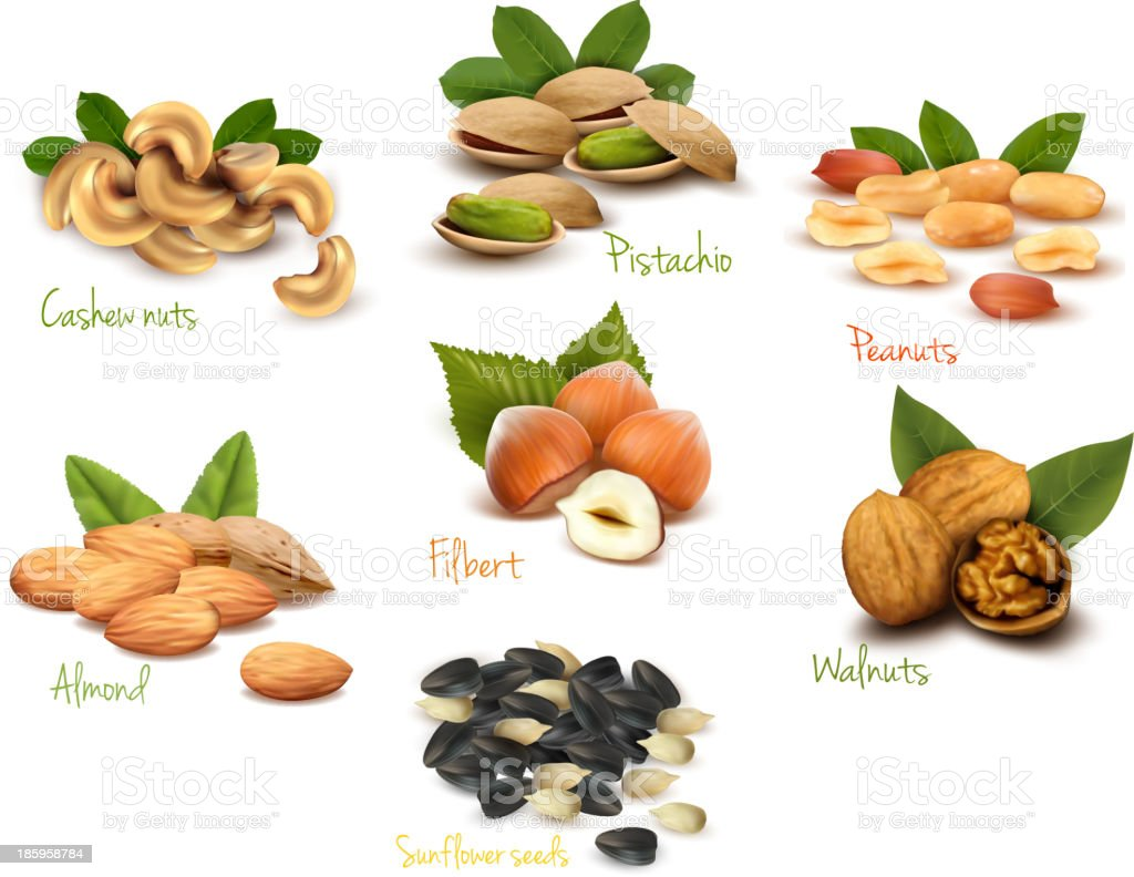 Assortment of nuts and their names vector art illustration