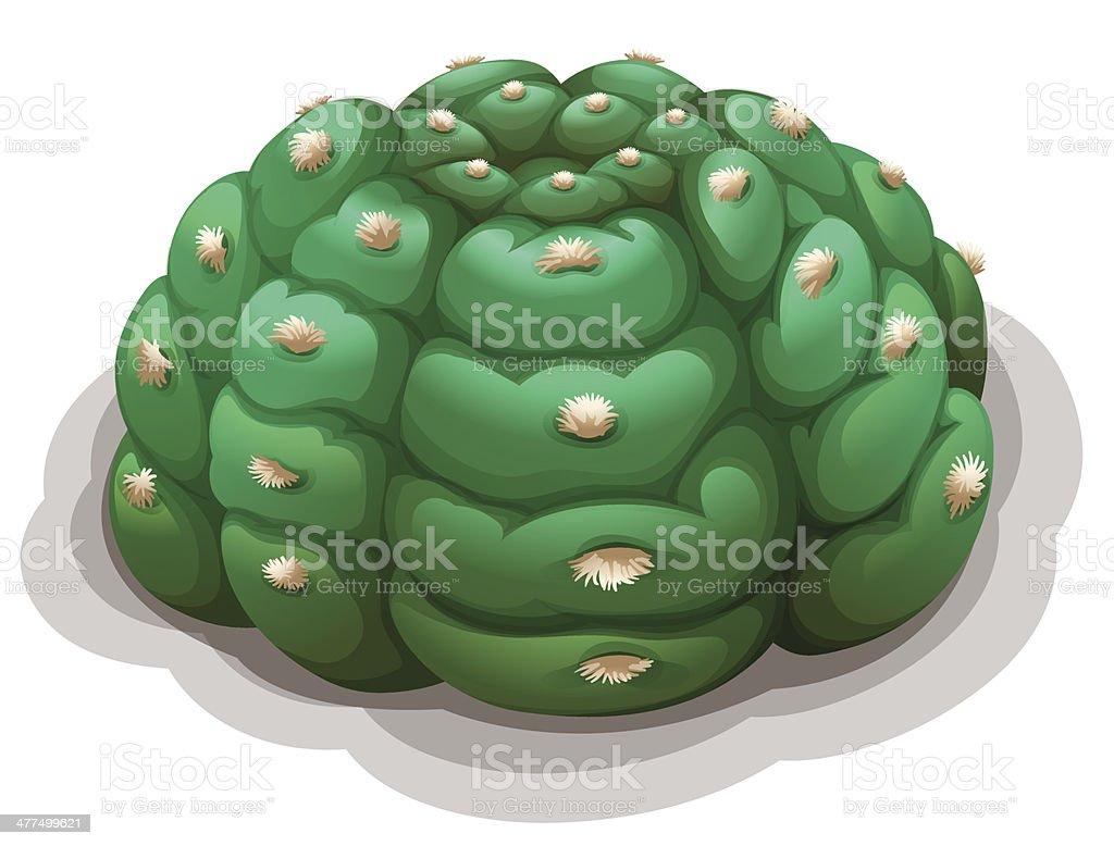 Astrophytum asterias kikko royalty-free stock vector art