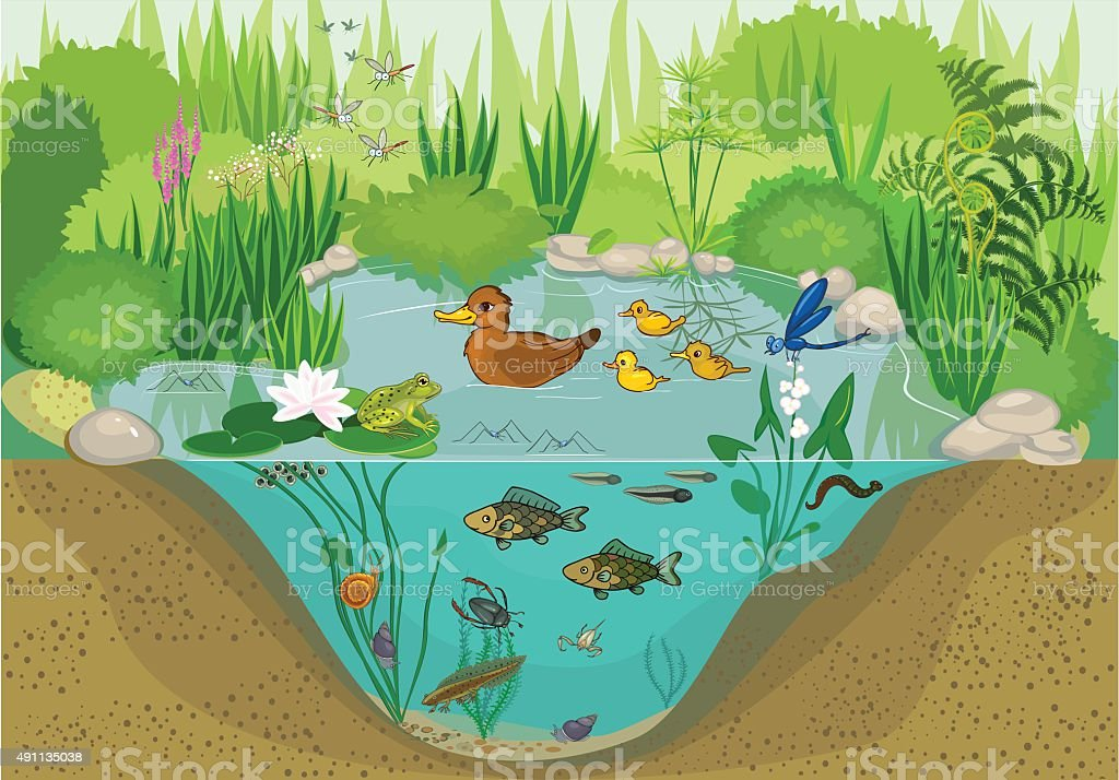 At the pond vector art illustration
