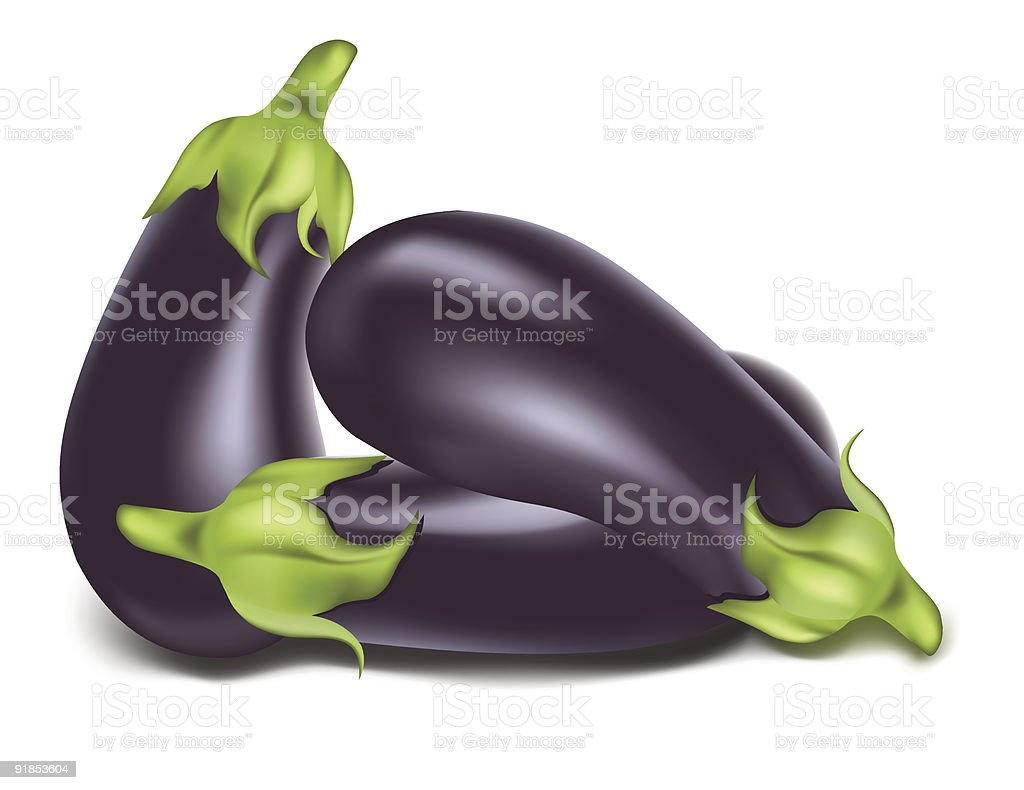 Aubergine. vector art illustration
