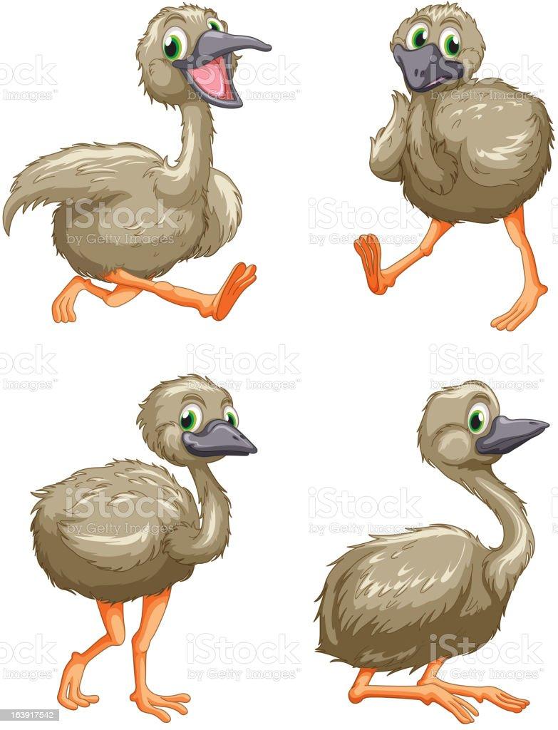 Australian emu royalty-free stock vector art