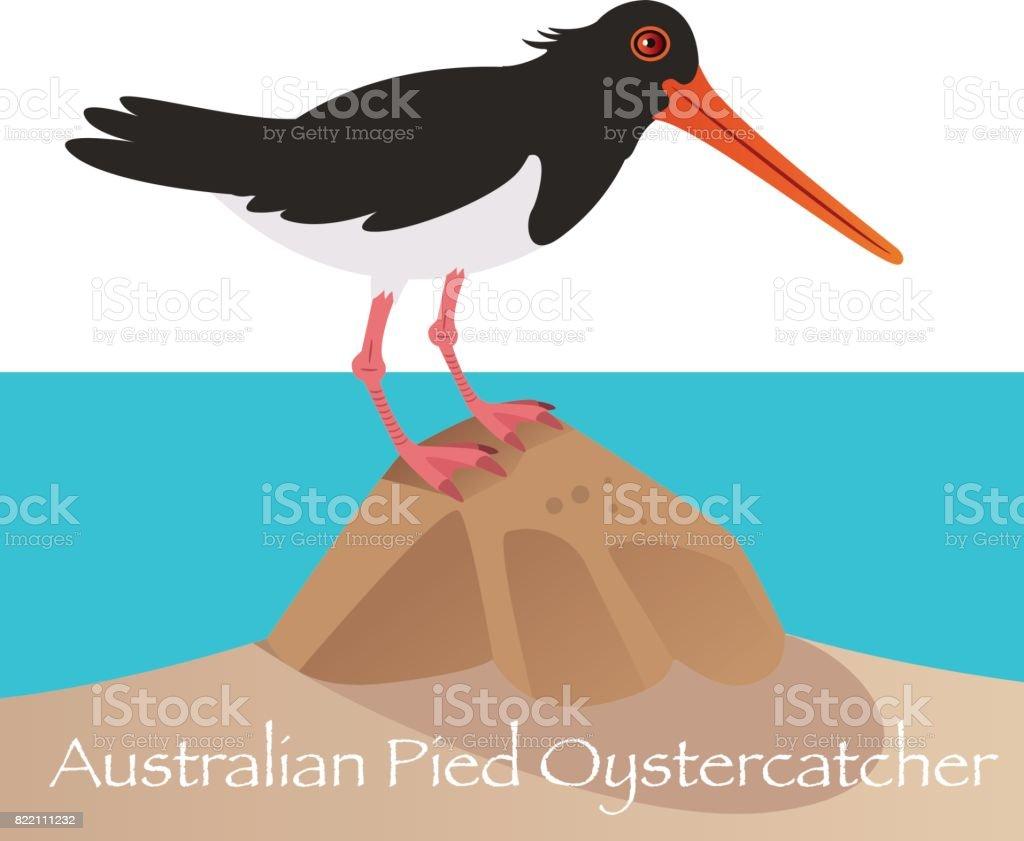 Australian Pied Oystercatcher vector art illustration