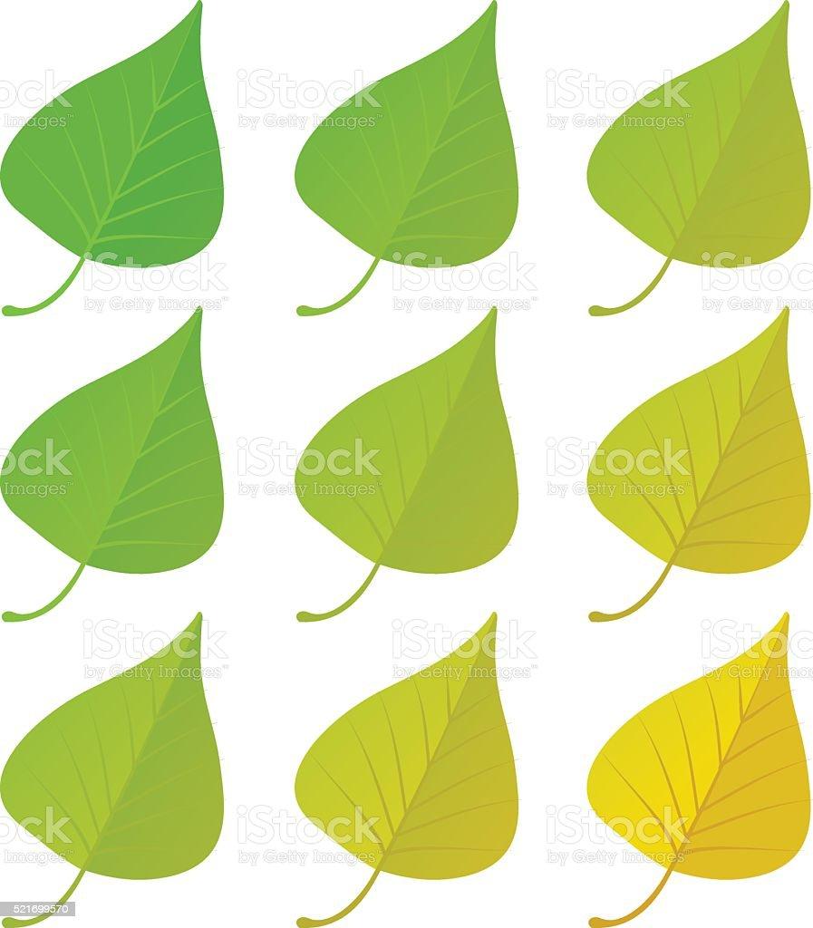 Autumn birch leaves set vector art illustration
