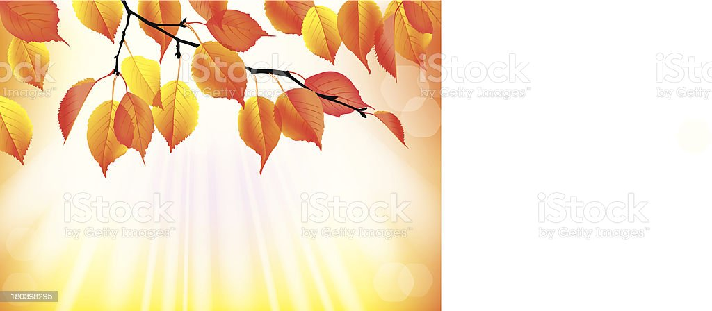 Autumn branch with yellow leaves background royalty-free stock vector art