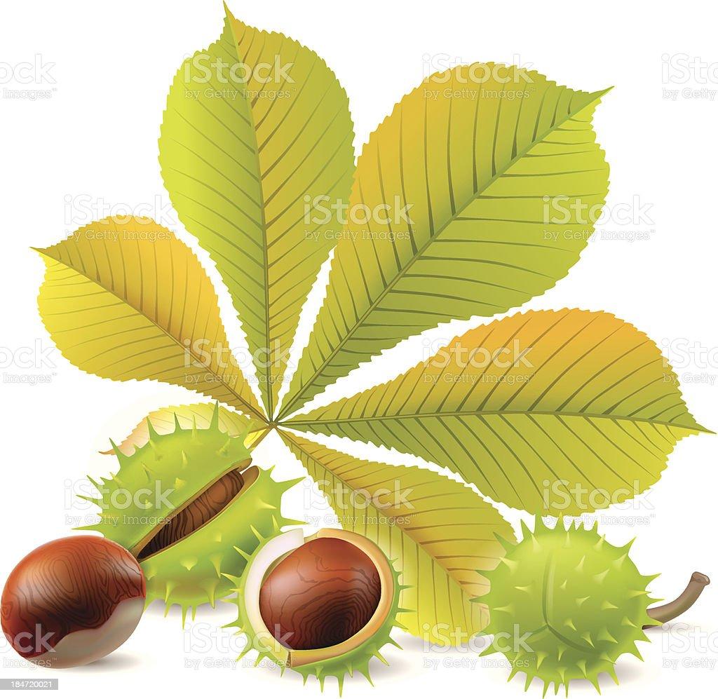 Autumn chestnuts vector art illustration