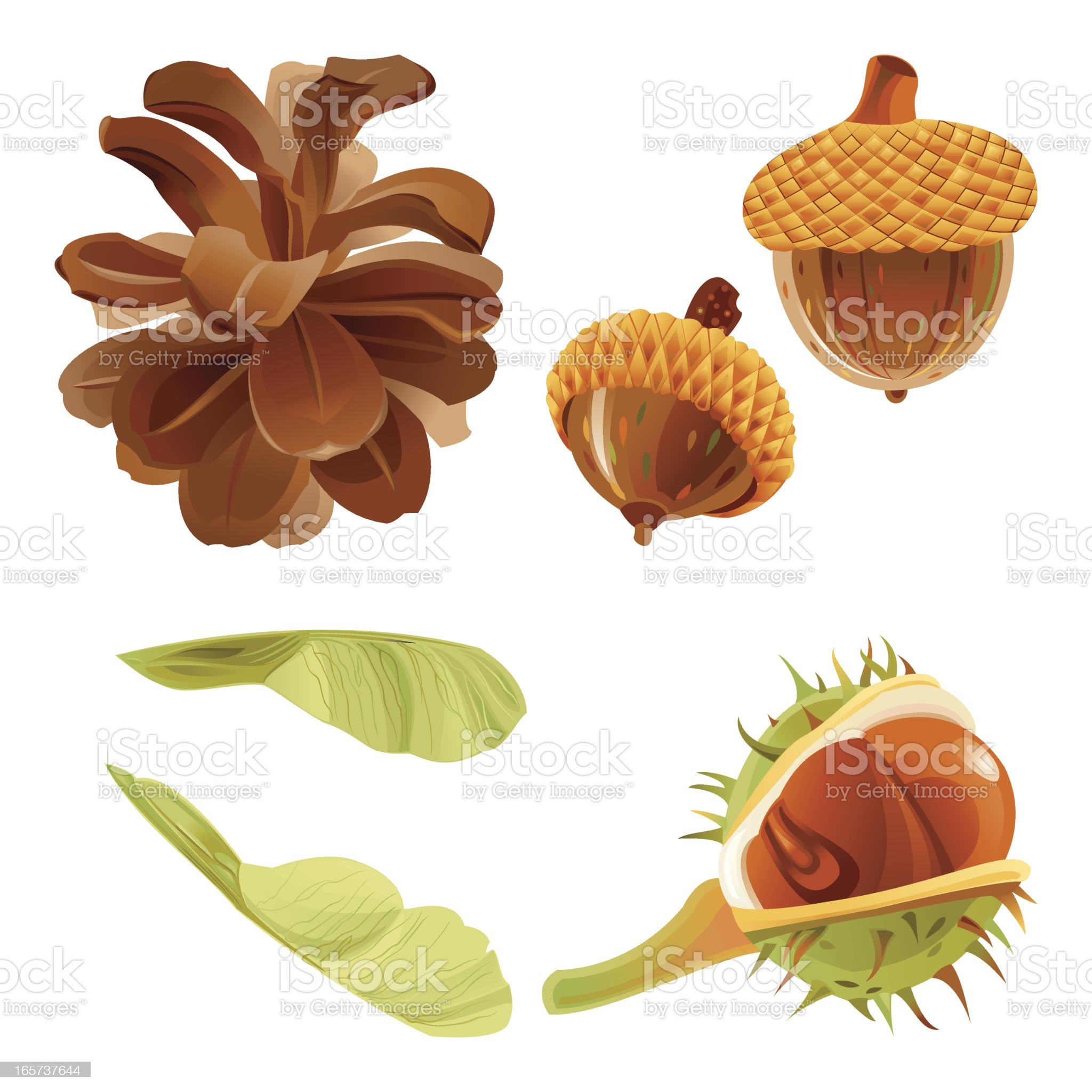 Autumn Forest Nuts and Seeds royalty-free stock vector art