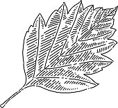 Autumn leaf Drawing