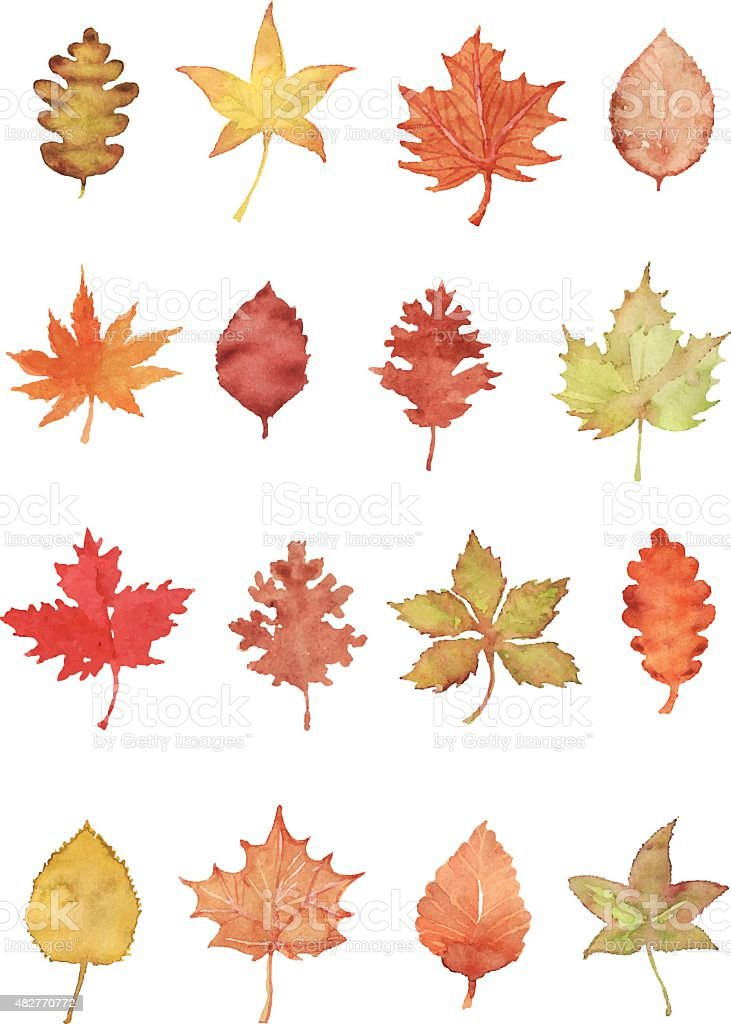 Autumn leaf vector art illustration