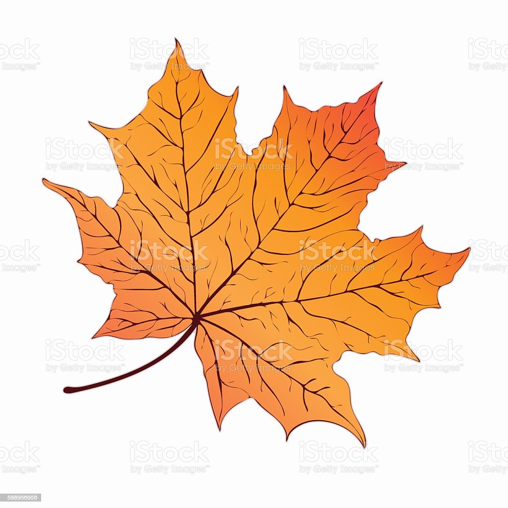 Autumn leaf. Yellow orange maple . Hand-drawing, vector illustration royalty-free stock vector art