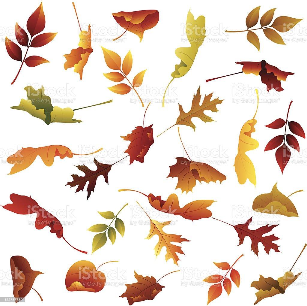 Autumn Leaves Collection vector art illustration