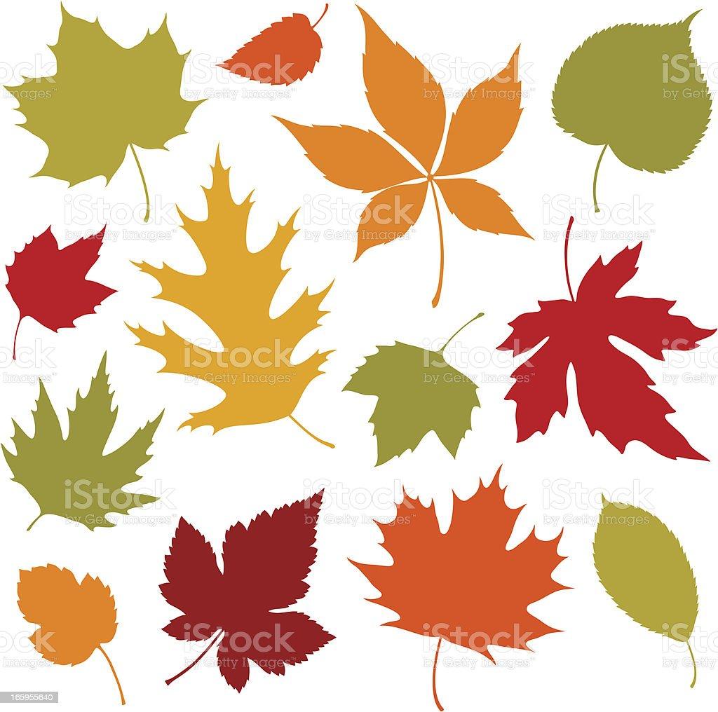Autumn Leaves Design Elements vector art illustration