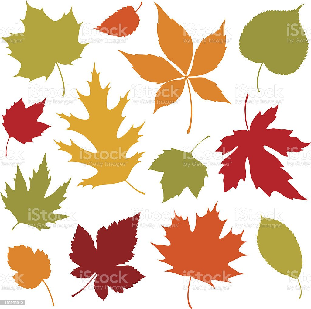 Autumn Leaves Design Elements vector art illustration