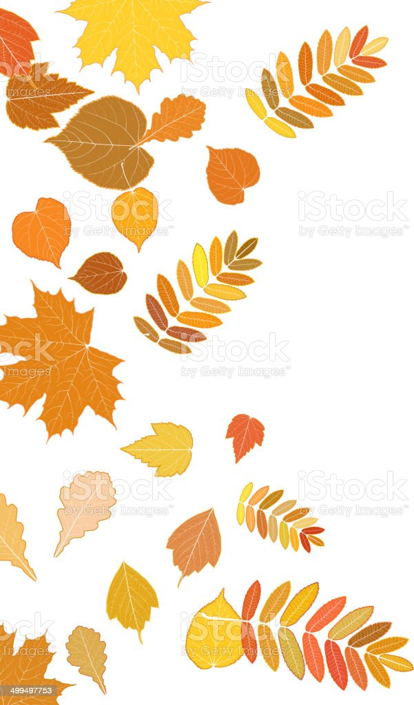 Autumn leaves falling and spinning on white. vector art illustration