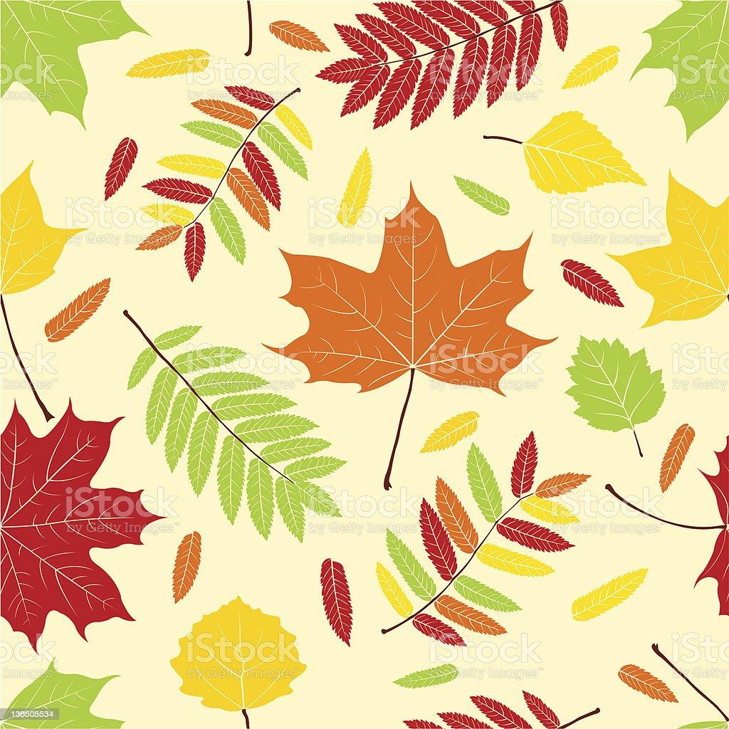 Autumn leaves. royalty-free stock vector art