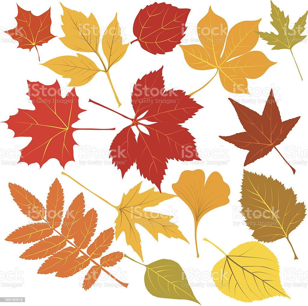 Autumn leaves with Veins vector art illustration