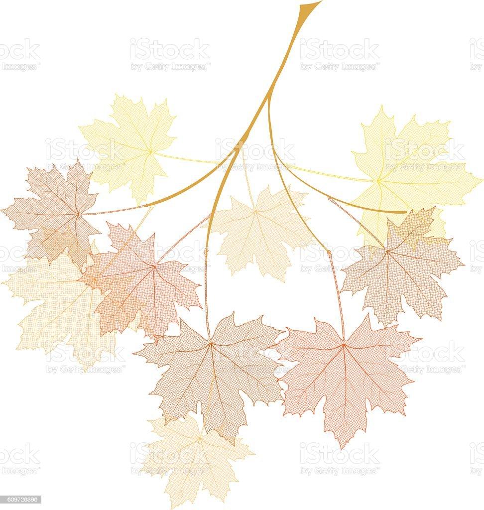 Autumn maple branch vector art illustration