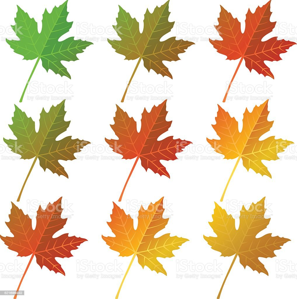 Autumn maple  leaves set vector art illustration