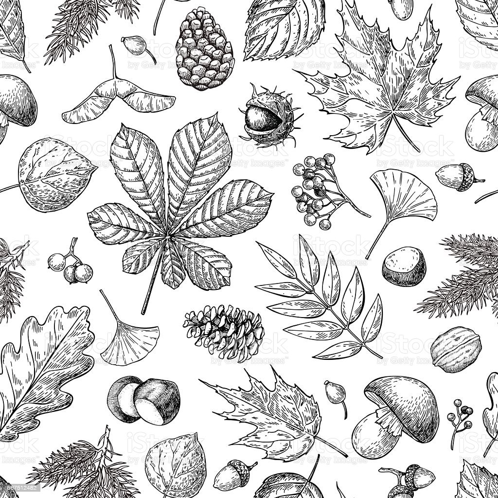 Autumn seamless vector pattern with leaves, berries, fir cones, vector art illustration