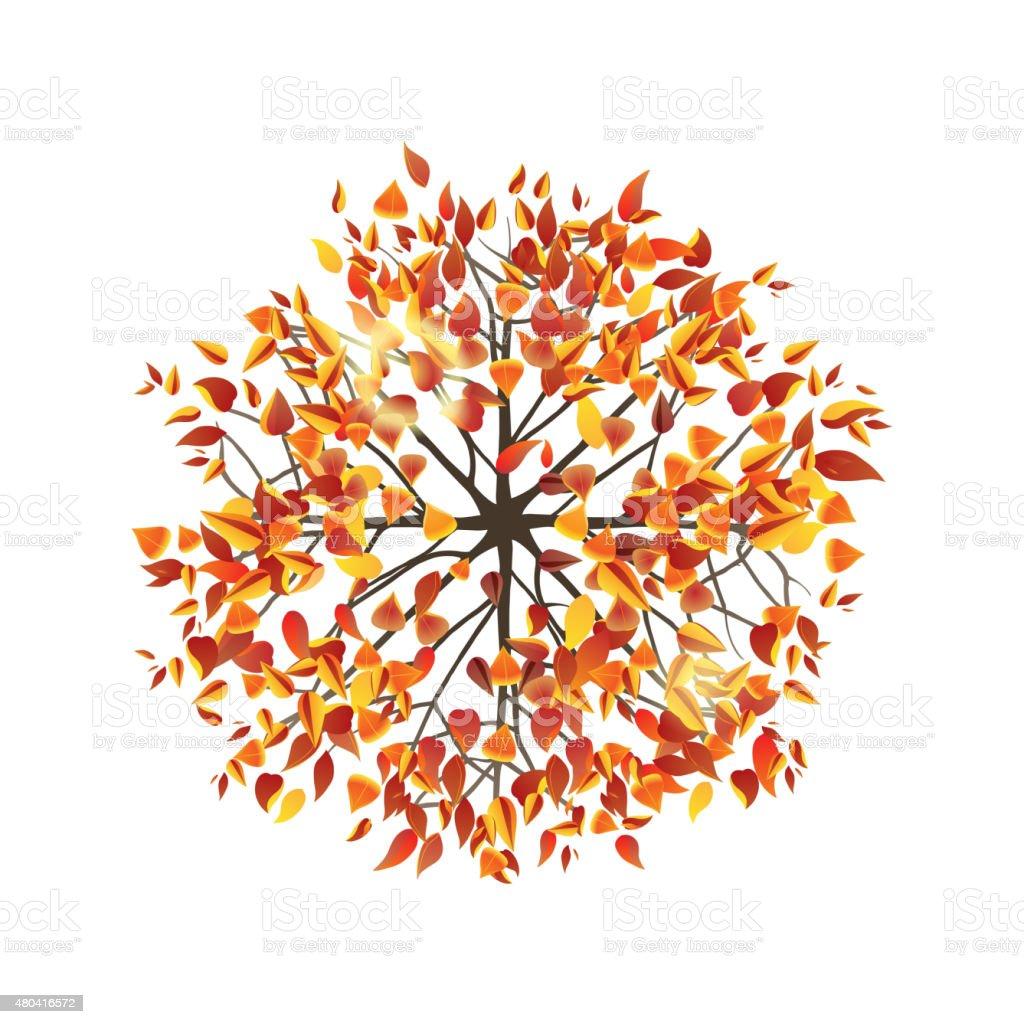 autumn tree top view vector art illustration