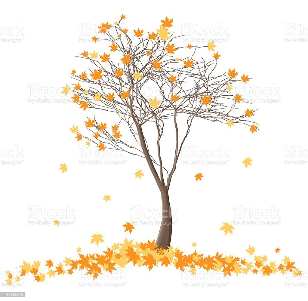 autumn tree vector art illustration