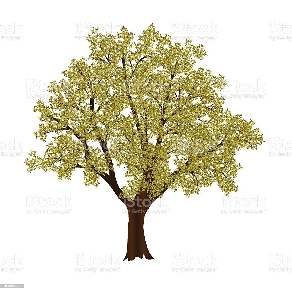 autumn tree with yellow leaves vector art illustration
