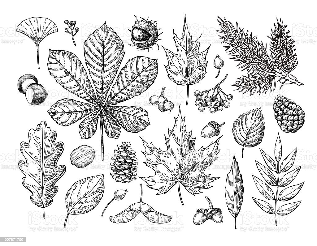 Autumn vector set with leaves, berries, fir cones, nuts, mushroo vector art illustration