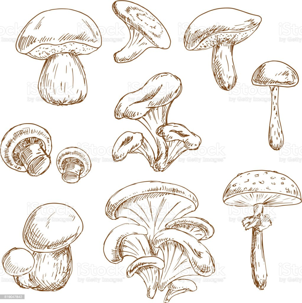 Autumnal forest mushrooms sketches set vector art illustration
