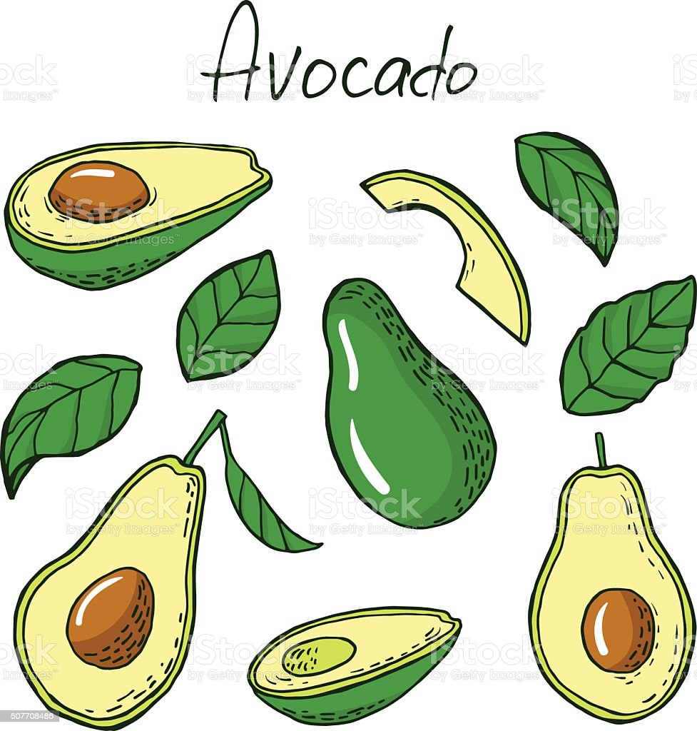 Avocado and leafs in sketch style vector art illustration