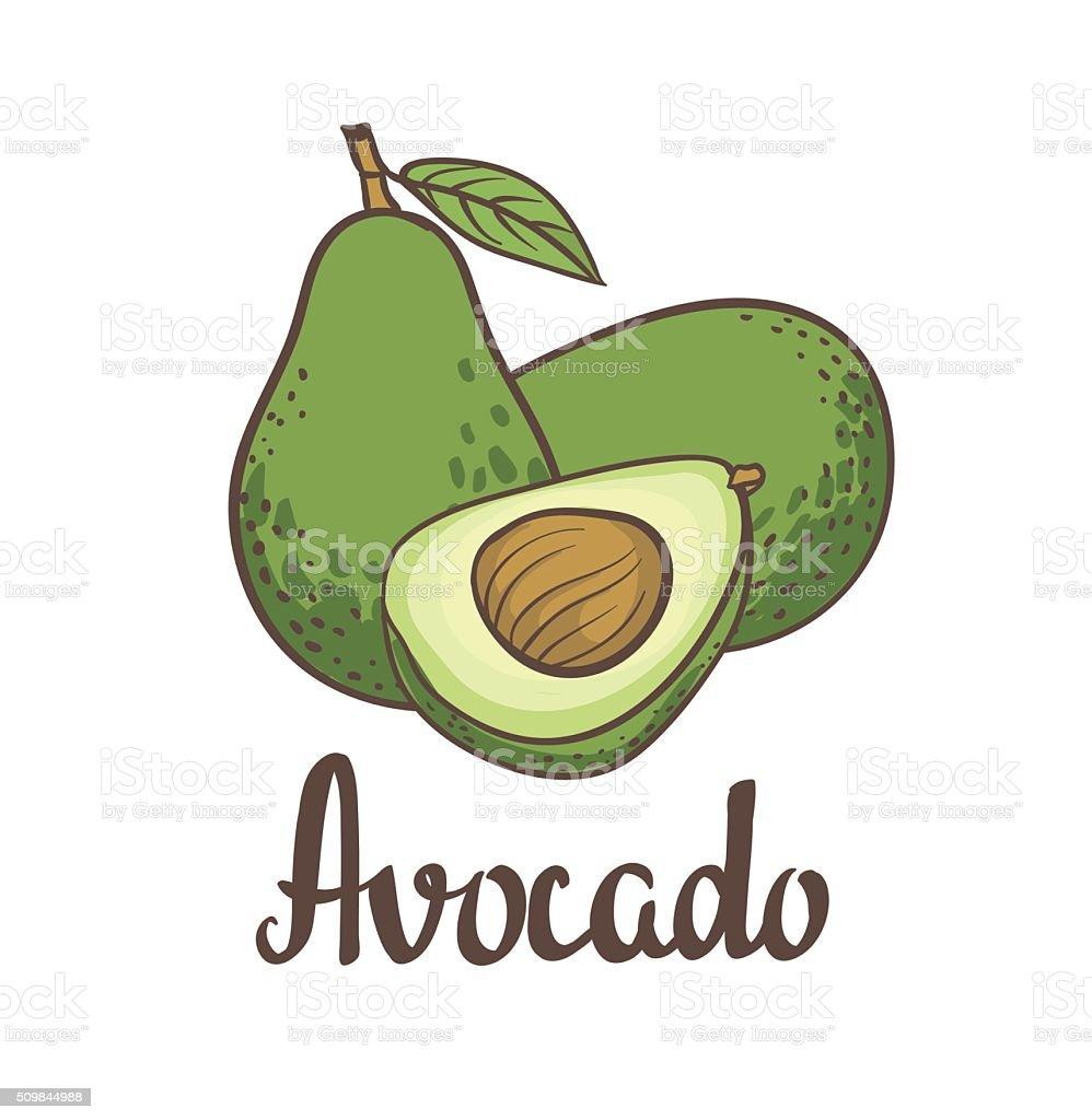 Avocado, half of avocado, avocado seed vector art illustration